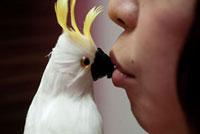 鳥の人形とキスをする女性の口元