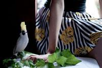 鳥の人形と葉っぱと女性の手元