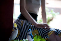 白と青の鳥の人形と葉っぱと窓辺に座る女性