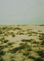 中田島砂丘の荒野の草と浜 浜松市 静岡県