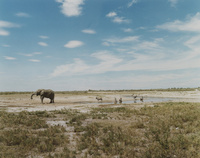 namibia 02276000113| 写真素材・ストックフォト・画像・イラスト素材|アマナイメージズ