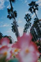 複数の花とヤシの木