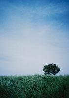 青空と草原に生える木