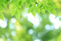 新緑 02284001203| 写真素材・ストックフォト・画像・イラスト素材|アマナイメージズ