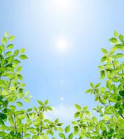 新緑と空 02284001249| 写真素材・ストックフォト・画像・イラスト素材|アマナイメージズ