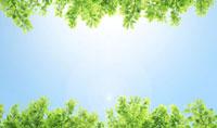 新緑と空 02284001251| 写真素材・ストックフォト・画像・イラスト素材|アマナイメージズ