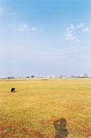 芝生のグランドと犬 02285000360| 写真素材・ストックフォト・画像・イラスト素材|アマナイメージズ