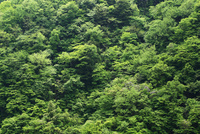 緑に萌える新緑の山の景色