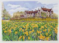 家の前にある水仙畑の風景 水彩イラスト
