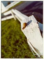 柱のカタツムリ