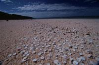 海岸にあるゼニイシ リザード島 オーストラリア