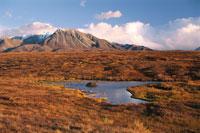 ビーバーダムの紅葉した風景 デナリ国立公園 アラスカ 02296000259| 写真素材・ストックフォト・画像・イラスト素材|アマナイメージズ