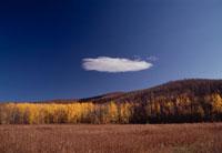 紅葉した山並みの風景 デナリ国立公園 アラスカ 02296000261| 写真素材・ストックフォト・画像・イラスト素材|アマナイメージズ