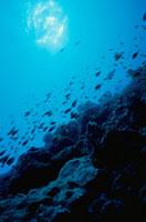 ボリフシ島のサンゴと熱帯魚と日光 水中撮影 モルジブ