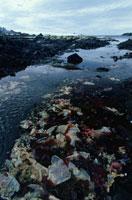 夏のエスペランサ基地の温暖化の海と海藻 南極半島