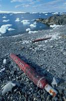 夏のエスペランサ基地のごみと流氷 南極半島