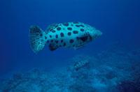 水中撮影 02296000995| 写真素材・ストックフォト・画像・イラスト素材|アマナイメージズ