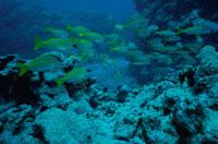 水中撮影 02296000997| 写真素材・ストックフォト・画像・イラスト素材|アマナイメージズ