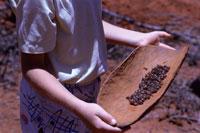 ハニーアントを持つ原住民 02296001204| 写真素材・ストックフォト・画像・イラスト素材|アマナイメージズ