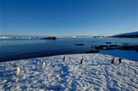 氷山とアデリーペンギンの群れ  南極