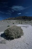 砂漠と植物