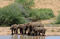 アフリカゾウの群れ 02296001821| 写真素材・ストックフォト・画像・イラスト素材|アマナイメージズ