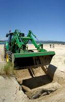 ごみ廃棄物とオーストラリアオットセイの死体