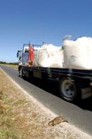 道路で交通事故にあったワラビー 02296002166| 写真素材・ストックフォト・画像・イラスト素材|アマナイメージズ
