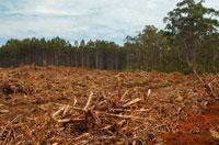 森林伐採 02296002169| 写真素材・ストックフォト・画像・イラスト素材|アマナイメージズ