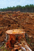 森林伐採 02296002170| 写真素材・ストックフォト・画像・イラスト素材|アマナイメージズ