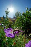 セイヨウミツバチ 02296002396| 写真素材・ストックフォト・画像・イラスト素材|アマナイメージズ