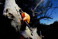 カメムシの仲間 02296002399| 写真素材・ストックフォト・画像・イラスト素材|アマナイメージズ
