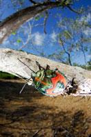ナナホシキンカメムシ 02296002402| 写真素材・ストックフォト・画像・イラスト素材|アマナイメージズ