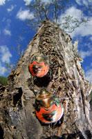 ナナホシキンカメムシ 02296002403| 写真素材・ストックフォト・画像・イラスト素材|アマナイメージズ
