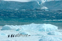 アデリーペンギンと流氷 02296002683| 写真素材・ストックフォト・画像・イラスト素材|アマナイメージズ