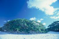 浜辺と青空