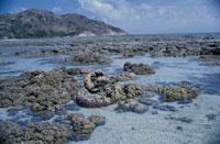 サンゴ礁の海 02296003121| 写真素材・ストックフォト・画像・イラスト素材|アマナイメージズ
