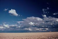 青空と麦畑 02296003134| 写真素材・ストックフォト・画像・イラスト素材|アマナイメージズ