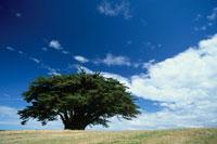 青空と木 02296003136| 写真素材・ストックフォト・画像・イラスト素材|アマナイメージズ