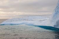 ジェンツーペンギンの群れ