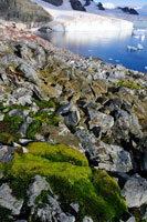 南極の苔 02296003418| 写真素材・ストックフォト・画像・イラスト素材|アマナイメージズ