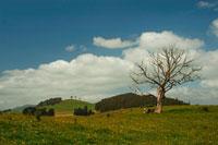 青空と雲 牧場の一本の木と緑