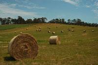 青空と牧草
