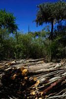 森林伐採 02296003674| 写真素材・ストックフォト・画像・イラスト素材|アマナイメージズ
