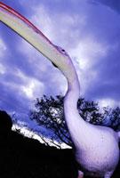 モモイロペリカン 02296003684| 写真素材・ストックフォト・画像・イラスト素材|アマナイメージズ