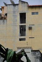街で暮らすイグアナ 02296003790| 写真素材・ストックフォト・画像・イラスト素材|アマナイメージズ