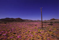 砂漠の花園