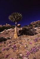 砂漠の花園 02296003821| 写真素材・ストックフォト・画像・イラスト素材|アマナイメージズ