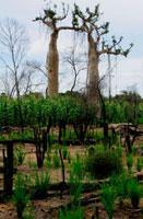 野焼きされた森