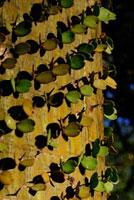 アスケンデンス 02296003877| 写真素材・ストックフォト・画像・イラスト素材|アマナイメージズ